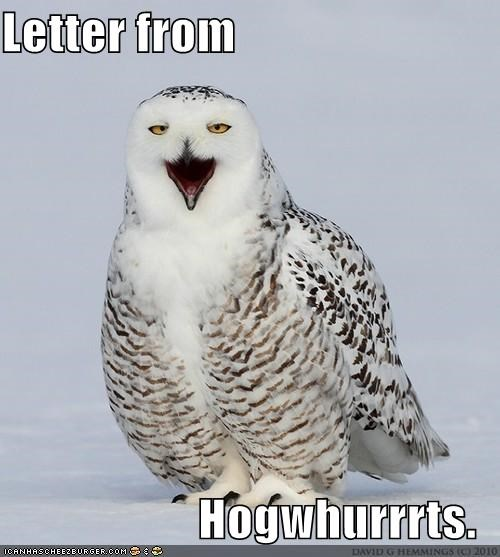 critters,Harry Potter,Hogwarts,letter,Owl,this weekend omg