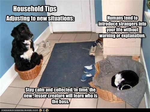 Adjusting to new situations: Humans tend to introduce strangers into your life without warning or explanation. Stay calm and collected. In time, the new , lesser creature will learn who is the boss. Household Tips
