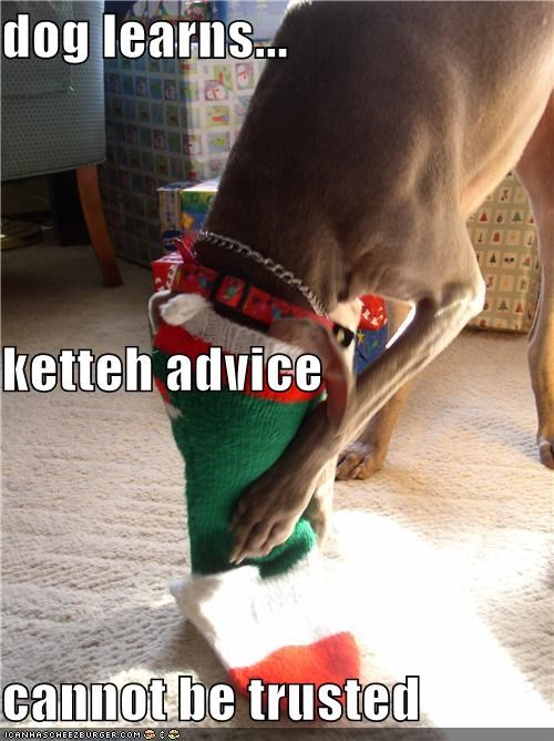 advice cannot cannot be trusted cat kitteh stocking stuck trick untrustworthy weimaraner