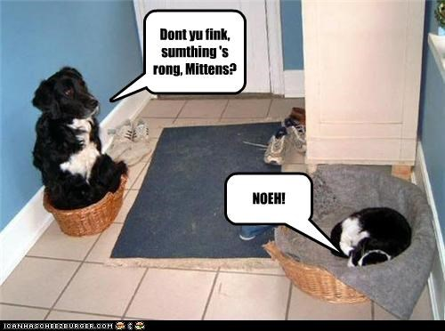 Dont yu fink, sumthing 's rong, Mittens? NOEH!