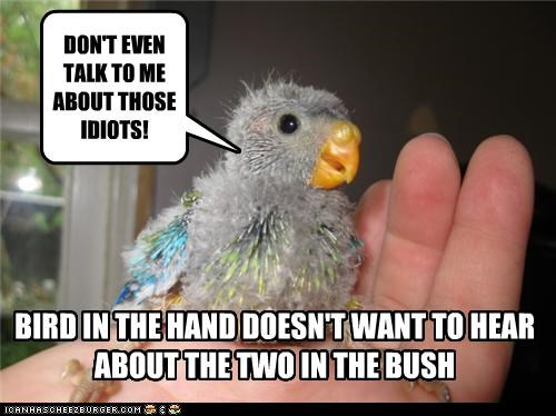 adage,bird,bird in the hand,caption,captioned,dont-talk,idiots,two in the bush,upset