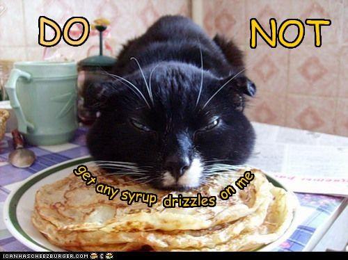 Cheezburger Image 4146035968