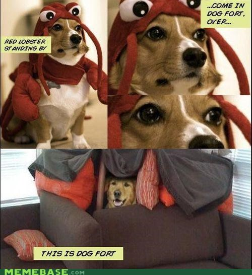 animemes,comics,corgi,couch,cushions,dogfort,fort,golden retriever,lobstor,Memes