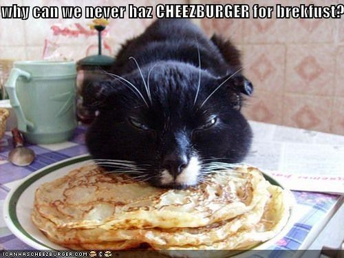 Cheezburger Image 4146896640