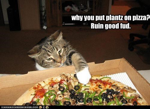 caption captioned cat food good Hall of Fame pizza plants question ruined tabby upset veggies - 4146983168
