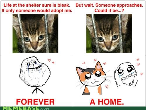 better than expected forever alone home kittehs Memes - 4147012096