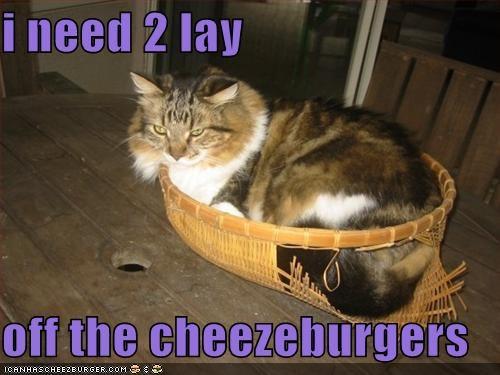 Cheezburger Image 4147316736