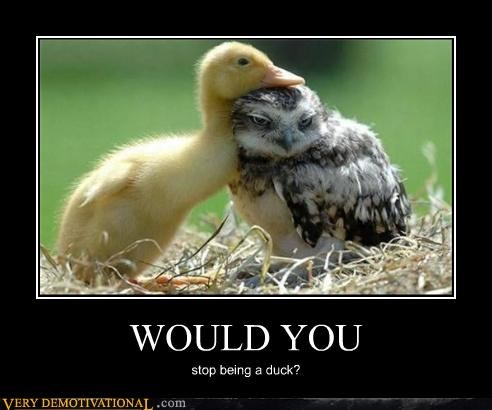WOULD YOU stop being a duck?
