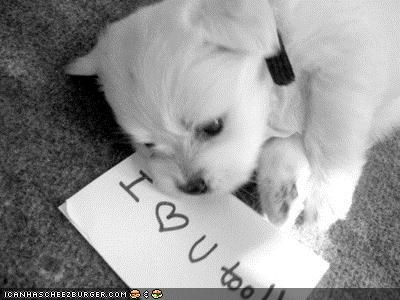 cute cyoot puppeh ob teh day heart I love note puppy whatbreed - 4147619584