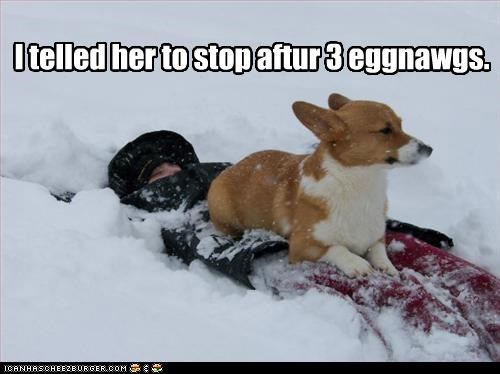 buried,corgi,drunk,eggnog,human,limit,passed out,reached,snow,stop,three,told you so