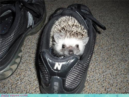 hedgehog pet rip - 4148112128