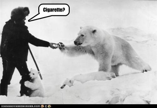 arctic,cigarettes,explorer,polar bear,smoke,snow