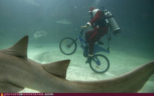 awesome,FTW,shark,underwater