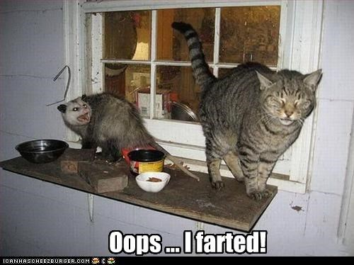 Oops ... I farted!