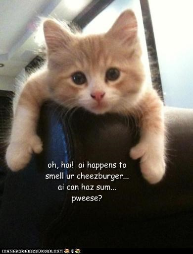 Cheezburger Image 4148576000