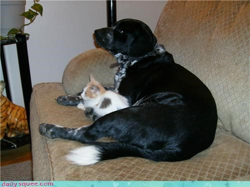 cat dogs user pets - 4149172736