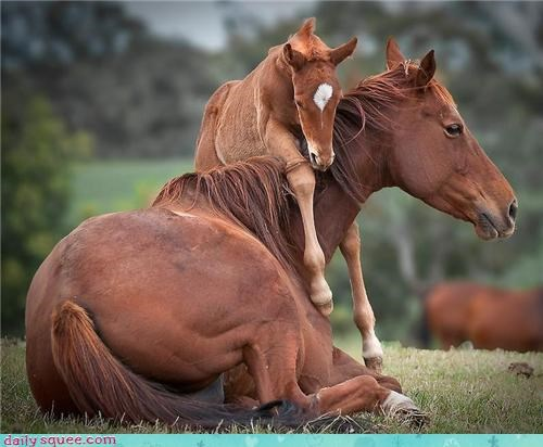 horse play,baby,mommy,squee,horse