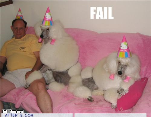 animals,birthday,dogs,party hats,poodles