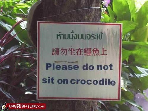 animal,engrish,sign