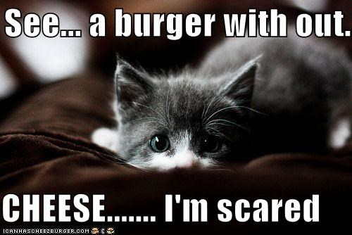 Cheezburger Image 4150862080