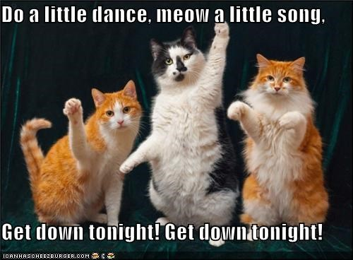 Do a little dance, meow a little song,   Get down tonight! Get down tonight!