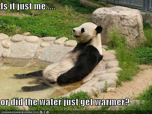 Cheezburger Image 4152274688