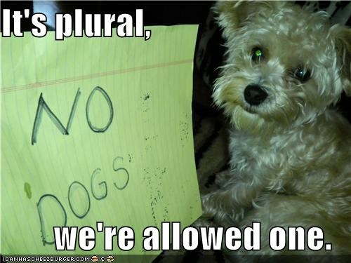 allowed justification no dogs one plural sign yorkshire terrier - 4152305664