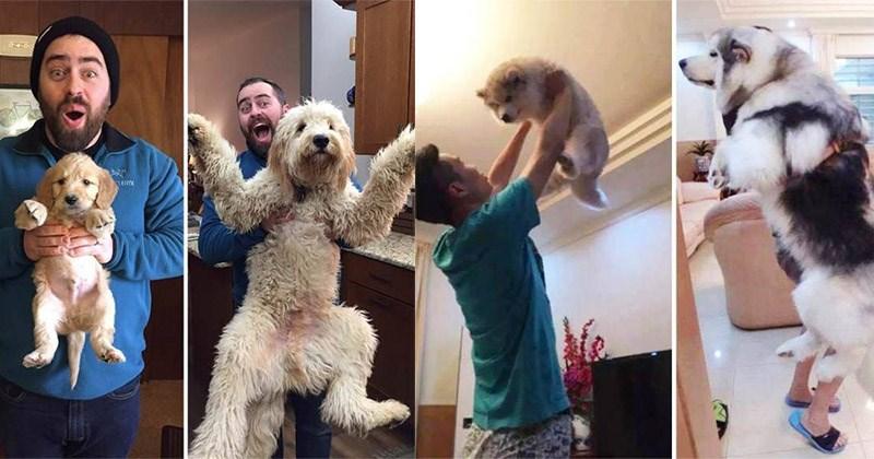 mascotas crecidas