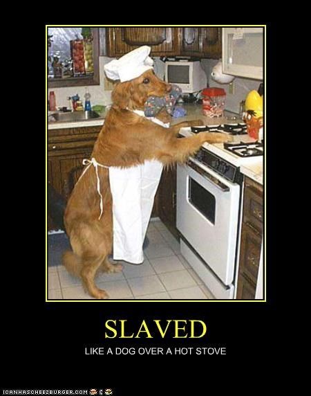 analogy,cooking,dogs,golden retriever,hot,simile,slaved,stove