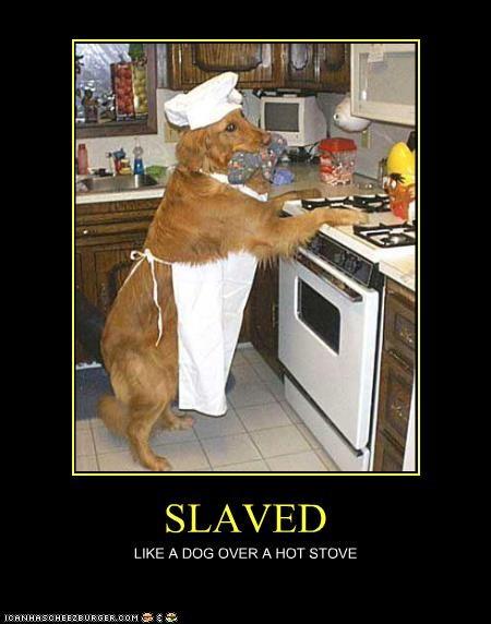 cooking golden retriever hot simile - 4152902144