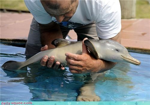 10 days old baby dolphin friendship hope injury magellan penguin nursing orphan rescued - 4152943872