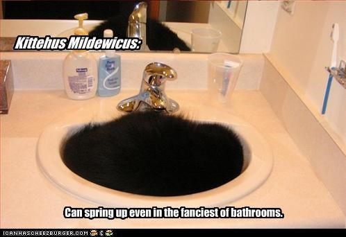 bathrooms,captioned,cat,curled up,fanciest,fancy,found,kitty,location,mildew,problem,sink,species,spring