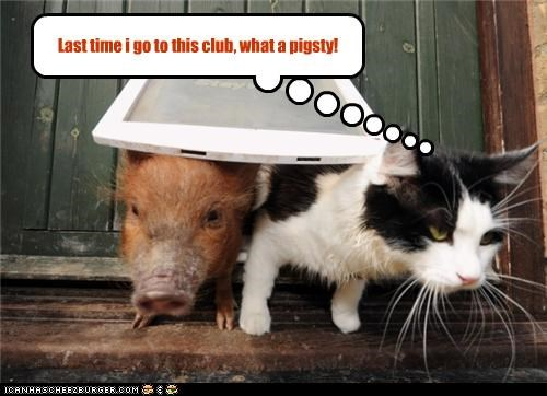 caption captioned cat club disappointed last time pig pigsty pun - 4153250048