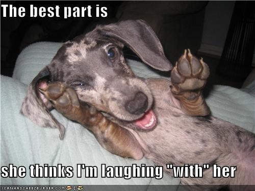 best,best part,dachshund,do not understand,human,ignorance,laughing,mixed breed,puppy
