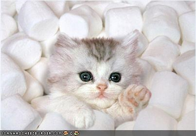 candy,cyoot kitteh of teh day,hot chocolate,kitten,marshmallows,sinking