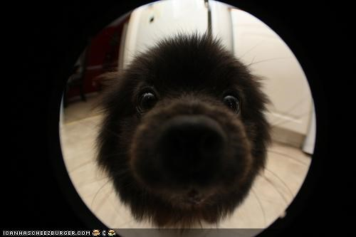 camera close up confusion curious cute cyoot puppeh ob teh day examining lens nose puppy question zoom