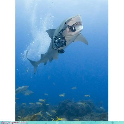 acting like animals action camera eating literalism paparazzi promise serious shark swimming threat tiger shark upset - 4154104576