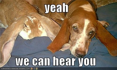 basset hound bunny ears floppy hear laying down we can yes you