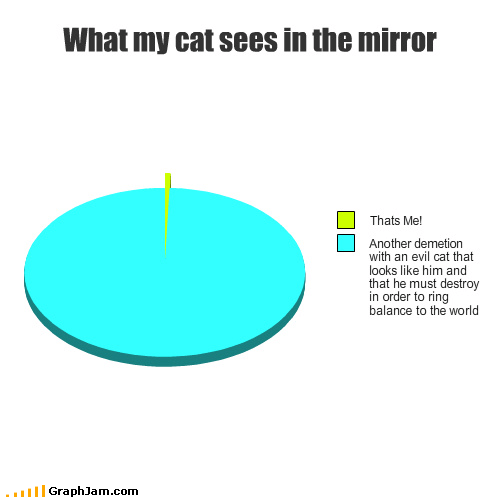 What my cat sees in the mirror