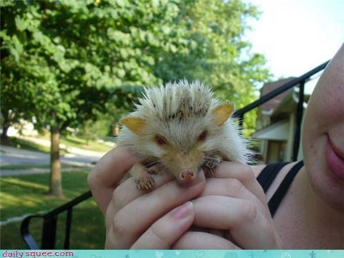 baby cute dirty hedgehog