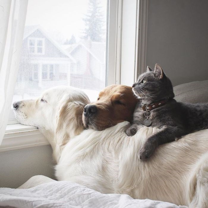 the unusual friendshio of two dogs and a cat