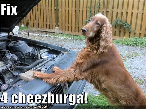 Cheezburger Image 4155913728