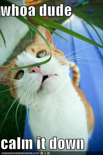 calm cat critters dude high leaf plants whoa