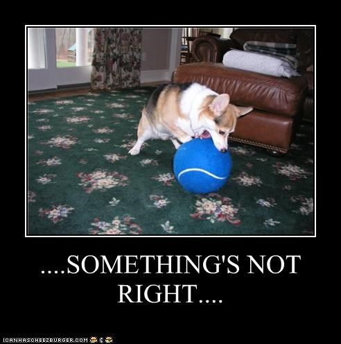 ball,corgi,FAIL,fetching,giant,incorrect,not,right,something,tennis ball,upset