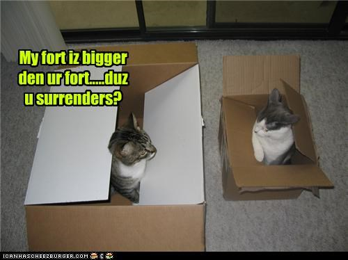 bigger,boxes,caption,captioned,cat,Cats,comparison,fort,question,surrender,tabby