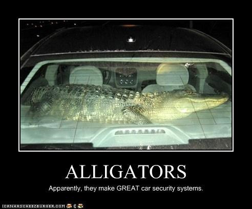 ALLIGATORS Apparently, they make GREAT car security systems.