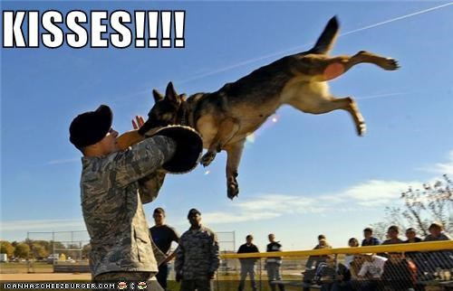 animals dogs funny Hall of Fame lolz soldier - 4157138688