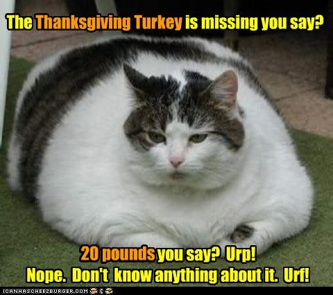 20 pounds burping caption captioned cat denial fat Hall of Fame lying missing thanksgiving Turkey