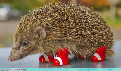 acting like animals boots excited hedgehog knuckles live action Movie oscar sonic sonic the hedgehog tails - 4157591040