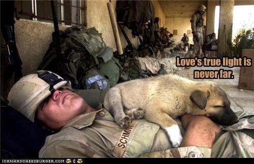 animals,Hall of Fame,lolz,pets,soldier